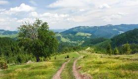 Les pentes des montagnes carpathiennes Le paysage des collines vertes Images stock