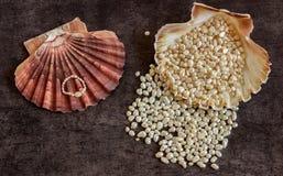 Les perles et un anneau se situent dans une coquille exotique Images libres de droits
