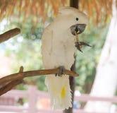 Les perroquets Photo stock
