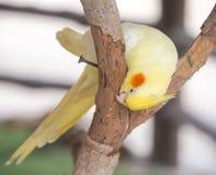 Les perroquets Images libres de droits