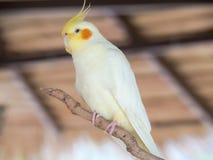 Les perroquets photo libre de droits