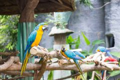 Les perroquets colorés sont sur les branches photo stock