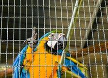 Les perroquets dans la cage à la station de vacances se garent photo stock