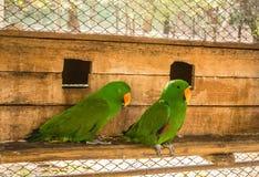 Les perroquets ou les psittacines sont des oiseaux trouvés dans plus tropical photographie stock libre de droits