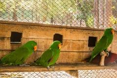Les perroquets ou les psittacines sont des oiseaux trouvés dans plus tropical image stock