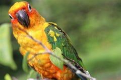 Les perroquets sont perché sur des branches d'arbre un matin clair images stock