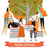 Les personnes heureuses sélectionnent des pommes dans le jardin Temps de moisson illustration de vecteur