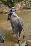 Les personnes non identifiées baignent des éléphants en rivière de Mae Sa Noi chez Mae S Photo libre de droits