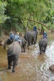 Les personnes non identifiées baignent des éléphants en rivière de Mae Sa Noi chez Mae S Photo stock
