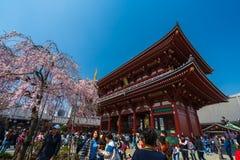 Les personnes non identifi?es visitent le temple de Sensoji avec des fleurs de cerisier dans Asakusa, Tokyo, Japon images stock