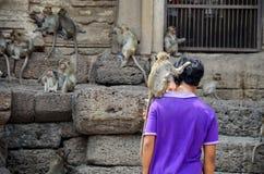 Les personnes thaïlandaises donnent la nourriture aux singes chez Phra esquintent Samyod Photographie stock libre de droits