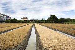 Les personnes thaïlandaises préparent la terre pour l'usine et le légume de plantation Image libre de droits