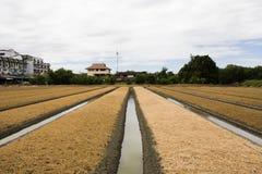 Les personnes thaïlandaises préparent la terre pour l'usine et le légume de plantation Photographie stock libre de droits