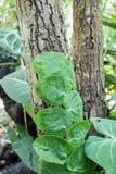Les petites feuilles plantent s'élever sur l'arbre dans la forêt images stock