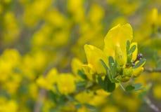 Les petites fleurs jaunes de la forêt Image stock