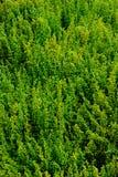 Les petites fleurs jaunes et vertes sont combinées ensemble Photo libre de droits