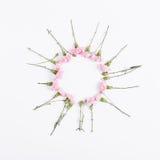 Les petites fleurs roses sont sous forme de cercle sur le backgroun blanc Image stock