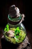 Les petites plantes vivantes dans un pot, sauvent l'idée de la terre Image libre de droits