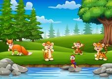 Les petits animaux apprécient la nature par la rivière Photos stock