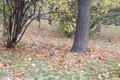 Les petits arbres sur libère photographie stock