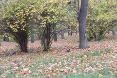 Les petits arbres sur libère un photo stock