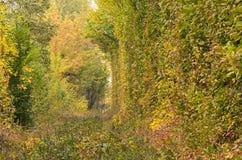 Les petits buissons ont caché des chemins de fer Tunnel de l'amour - endroit merveilleux créé par nature Photographie stock libre de droits