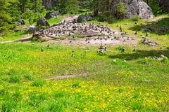 Les petits chiffres en pierre sur la forêt traînent près du tellurure, le Colorado Photographie stock