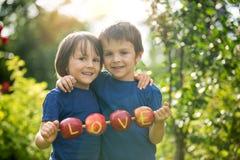 Les petits enfants mignons, frères de garçon, tenant un signe d'amour, ont fait le franc Images libres de droits
