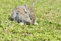 Les petits lapins se reposant dehors au printemps Images stock