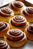 Les petits pains fraîchement cuits au four roule avec le remplissage de cannelle et de cacao Plan rapproché Kanelbulle - dessert  images libres de droits