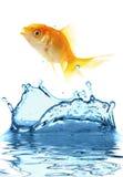 Les petits poissons d'or Images libres de droits