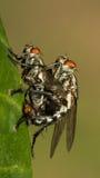 Les peu de mouches Photographie stock libre de droits