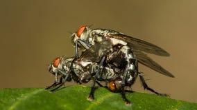 Les peu de mouches Photos stock