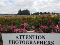 Les photographes d'attention signent dedans le champ coloré de dahlia image stock