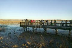 Les photographes de nature et d'oiseau photographient des oiseaux au lever de soleil de la plate-forme sur le lac à la réserve de Images stock