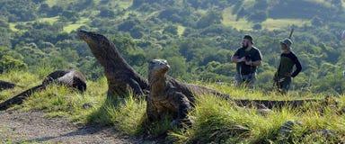 Les photographes et les dragons de Komodo sur l'île Rinca Le dragon de Komodo, komodoensis de Varanus Photo libre de droits