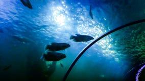 Les photos abstraites à l'intérieur de l'abrégé sur photos d'aquarium brouillé bourdonnent Beaucoup de couleurs image libre de droits