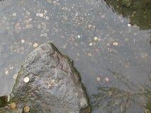 Les pièces de monnaie dans la source d'eau Images stock