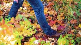 Les pieds équipent la marche sur des feuilles de chute extérieures avec la nature de saison d'automne sur le fond Style à la mode clips vidéos