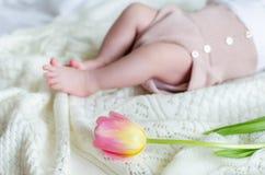 Les pieds du petit bébé minuscule dans des shorts de laine avec la tulipe fleurissent en avant Photo stock