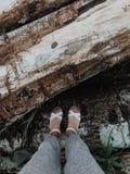 Les pieds femelles en sandales se tiennent sur un arbre dans la nature de forêt de forêt flânez Tir vertical image stock