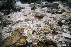Les pierres au fond d'une montagne claire coulent images libres de droits