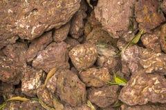 Les pierres poreuses volcaniques rouges se situent dans un tas des feuilles vertes et sèches texture extérieure naturelle photos libres de droits