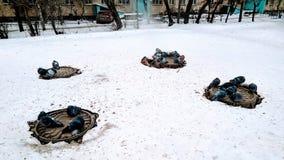 Les pigeons de Frost se dorent en trous d'homme photo stock