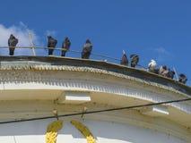 Les pigeons se reposent au bord du toit Photographie stock