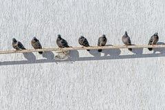 Les pigeons se reposent sur un tuyau près d'un mur blanc dans un jour ensoleillé Photographie stock