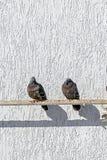 Les pigeons se reposent sur un tuyau près d'un mur blanc dans un jour ensoleillé Image stock