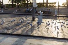 Les pigeons se tiennent en raison du marché de fruits de mer d'air ouvert près de la station de métro de Deira de paume à Dubaï Image libre de droits
