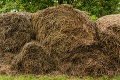Les piles de blé ont tordu dans un petit pain Images libres de droits
