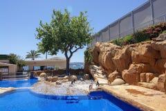 Les pingouins basculent la piscine d'eau bleue Marineland photo libre de droits
